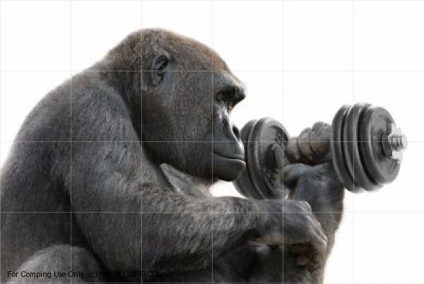 Max Strength and Conditioning Workouts | INTELLIGENT ...